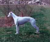 Ypsylionia Snowwhite